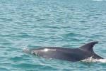 Licata, coppia di delfini al porto… curiosità e scatti dei tanti presenti