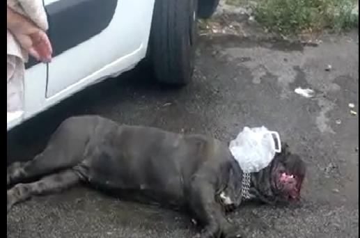 Trovati chiusi in un furgone in fin di vita, agenti salvano 3 cani – VIDEO