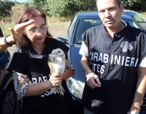 Acireale, liberati 3 esemplari di barbagianni detenuti illecitamente in un appartamento