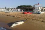 Terribile scoperta in spiaggia, trovato delfino morto: l'immagine commuove il web