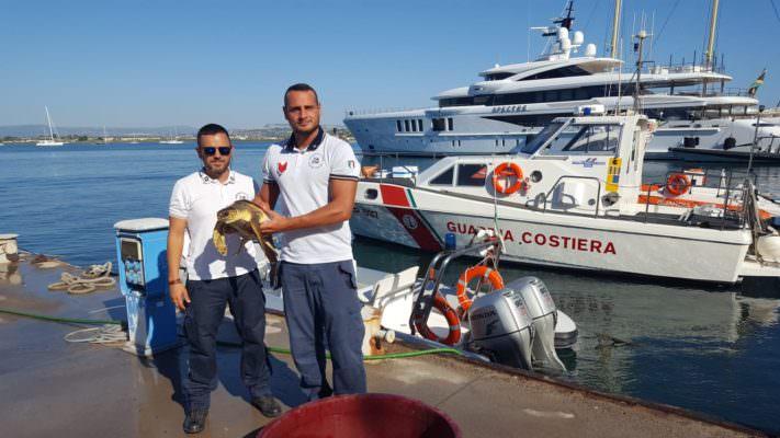 Indebolita e con un amo da pesca in bocca: Guardia Costiera recupera tartaruga in mare