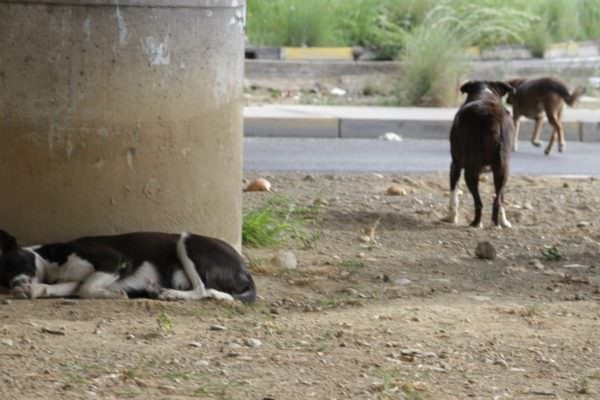 """Uomo uccide e abbandona in strada il proprio cane: i familiari lo """"incastrano"""""""