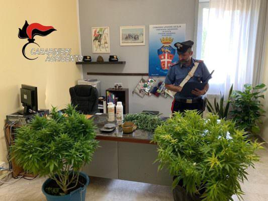 Blitz antidroga dei carabinieri, in manette un 28enne e un 64enne per possesso di marijuana