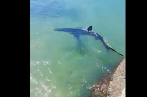 """Squalo a pochi passi dalla riva, bagnanti nel """"panico"""" nel Siracusano: il VIDEO di quei momenti"""