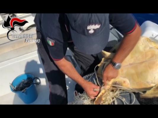 Tartaruga marina intrappolata nei rifiuti: salvata dai carabinieri