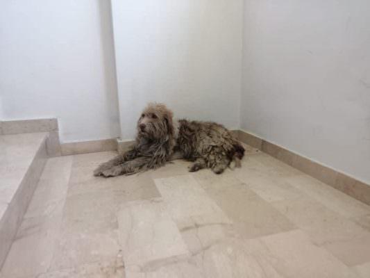 Cane di quartiere ferito si rifugia nell'androne di un palazzo: condomini si mobilitano per aiutare Stellina