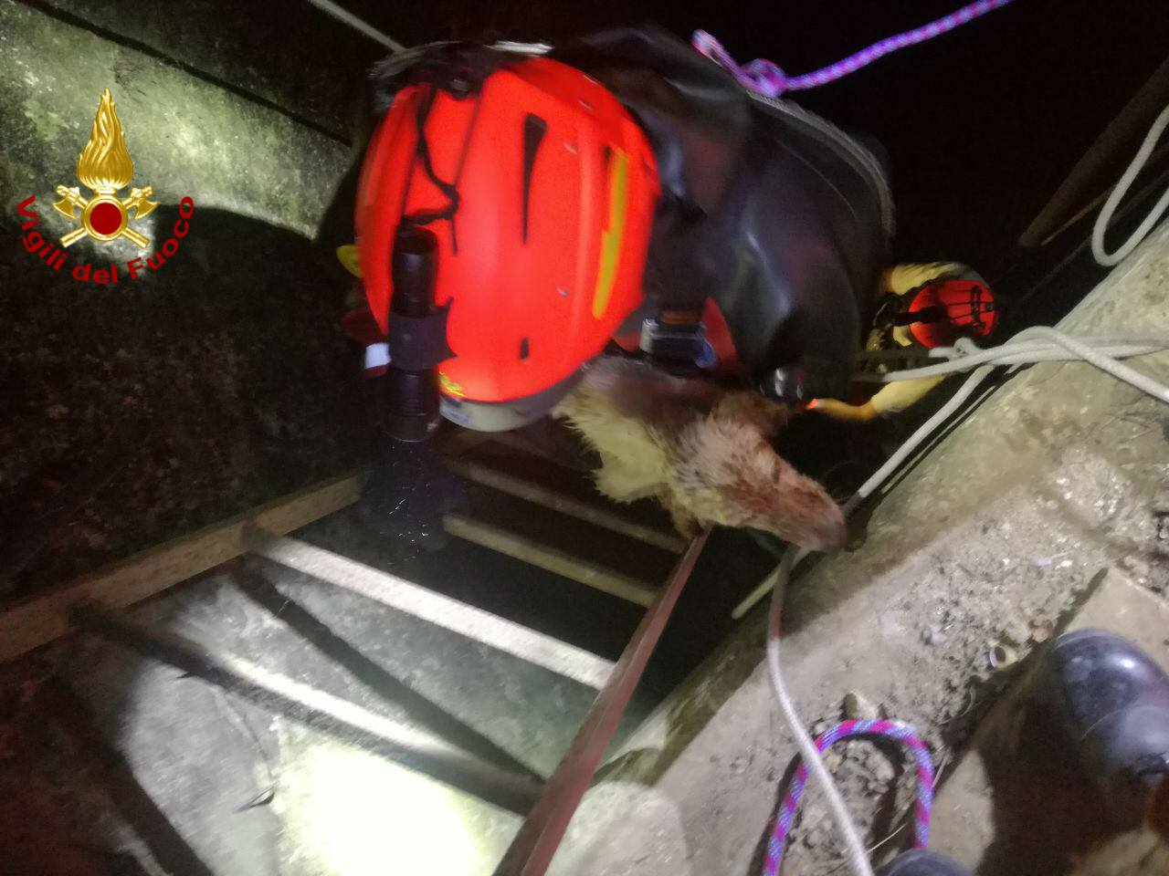 Panico nel Catanese, cane cade in un pozzo: salvato dai vigili del fuoco – FOTO