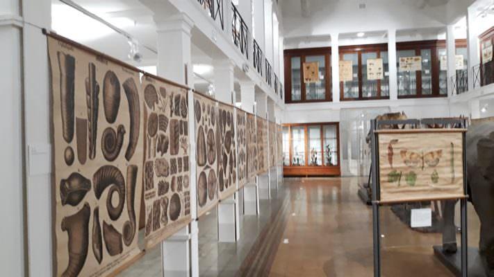 """Catania, inaugurata la mostra """"Natura elegans"""": protagoniste indiscusse le tavole parietali"""