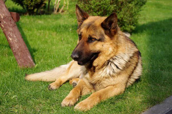 Anziano muore solo in casa, il suo cane lo veglia e allarma i vicini con ululati tristi: la vittima è Orazio Miceli