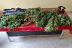 Piante di cannabis indica in casa, in manette 45enne – Le FOTO