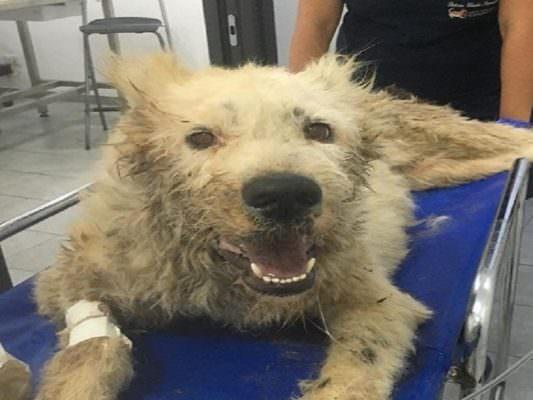 """Cagnolina uccisa a colpi di pala, """"giustizia per Ruth"""": gli animalisti scendono in piazza con un corteo"""