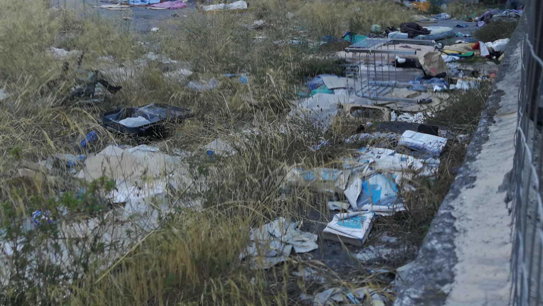 Catania, interi quartieri e case invase da topi: le segnalazioni impongono la ricerca immediata di una soluzione