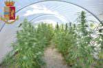 Vasta piantagione di Cannabis Indica nel giardino di casa: coniugi arrestati