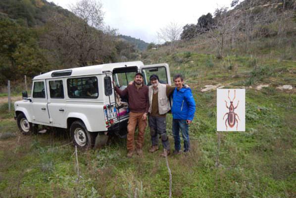 """Sicilia, scoperto un coleottero nella riserva Vallone di Piano della Corte: """"Non si conosce ancora la biologia di questa specie"""""""