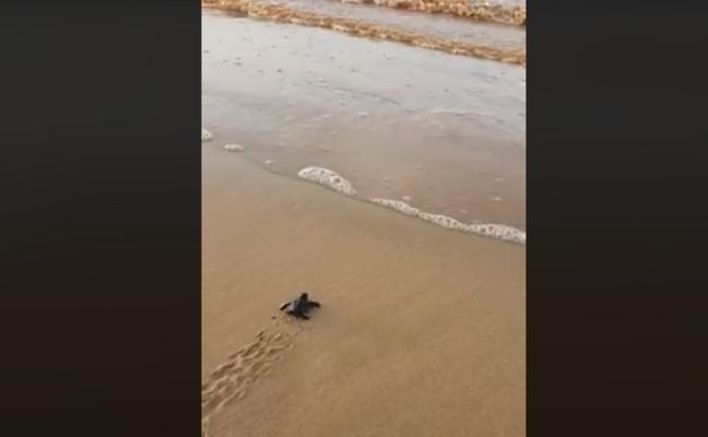 Pioggia e nubifragi non fermano il miracolo della vita: il VIDEO che mostra la nascita di 25 tartarughine Caretta Caretta