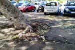 """Marciapiedi sconnessi in diverse strade del quartiere Borgo-Sanzio, Cerri: """"Urgente intervenire senza tergiversare"""""""