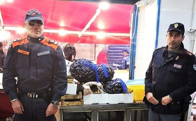 Pescherie abusive e prodotti ittici in cattivo stato destinati alla vendita: sequestri e sanzioni