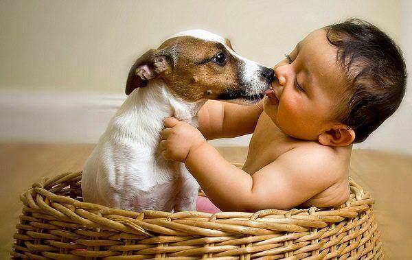 """Zoonosi, quando gli animali infettano l'uomo: quali specie sono a rischio e che effetti hanno le """"loro"""" malattie?"""