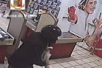Paura in un negozio, minaccia i presenti con una pistola e porta via il bottino: la rapina immortalata dalle telecamere