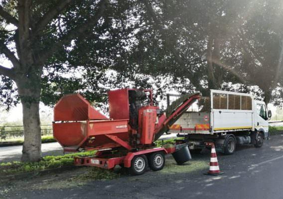 """Circonvallazione di Catania, potati gli alberi. Buceti: """"Eliminare ogni possibile emergenza nel territorio"""""""