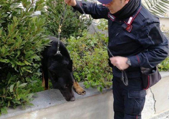 Cento grammi di marijuana e materiale per il confezionamento in casa: arrestato 25enne nel Catanese