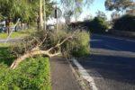 """Catania, alberi caduti nelle vie Don Minzoni e Adone. Zingale: """"Controlli per evitare situazioni simili"""" – FOTO"""