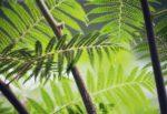 """""""È il momento per la Natura"""": oggi la giornata mondiale dell'ambiente"""