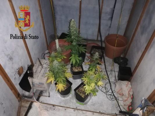 Scoperto garage della droga, coltivava piante di marijuana indisturbato: arrestato un 32enne