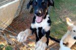 Avvelenati sette cani, tre non ce l'hanno fatta: la proprietaria animalista piange su Facebook
