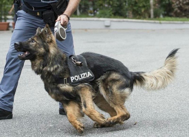Scomparsa del piccolo Gioele, potenziate le ricerche: altri tre cani molecolari impiegati