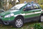 Catania, discarica abusiva e taglio boschivo illecito in area protetta: una denuncia