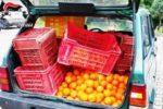 Furto nel Catanese, rubati 150 chili di arance di proprietà del Comune pronti per essere rivenduti: 2 arresti