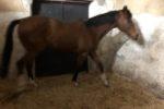 Corsa clandestina di cavalli nel Catanese: indagate 3 persone, sequestrati 2 animali
