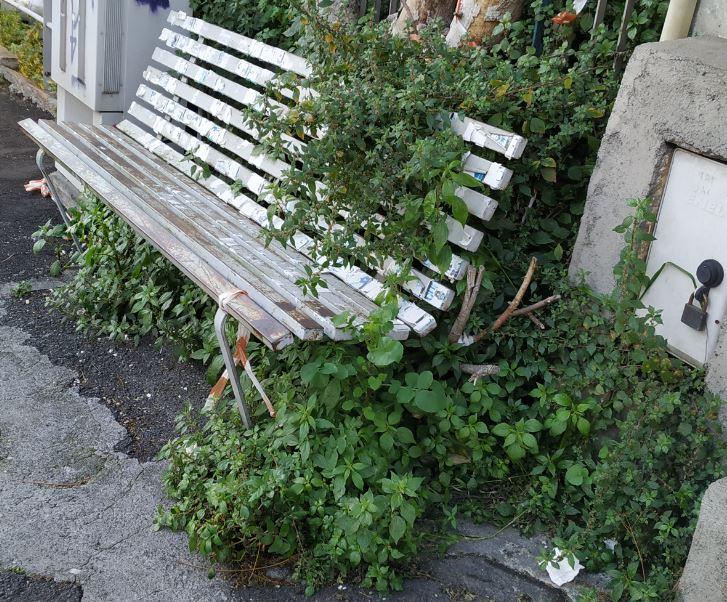 Catania, scarsa manutenzione del verde e danni alla strada: le segnalazioni per il quartiere Borgo-Sanzio