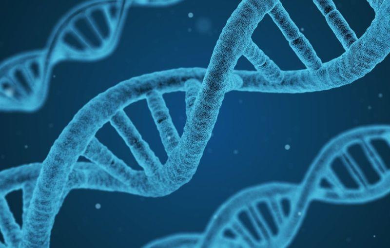 Salute, Ordine biologi e Sigu dicono no a test genetici nelle farmacie
