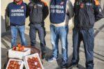 Tutela delle risorse ittiche, sequestrati dalla Guardia Costiera 15 chili di polpa di riccio