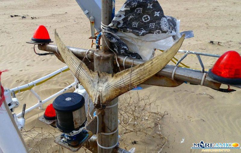 Giallo a Torre Salsa, resti di un peschereccio trovati in spiaggia: la denuncia di Mareamico con FOTO e VIDEO