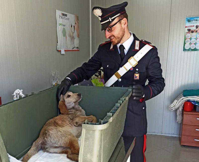 Orrore nel Catanese, spara a un cane causandogli una paralisi: 60enne denunciato