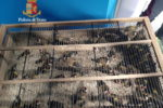 Ermellini trasportati in condizioni di privazioni, denunciati due uomini per maltrattamento di animali