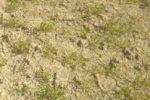 """Allarme siccità, situazione critica in Sicilia. Coldiretti: """"Natura in tilt in tutta l'Isola"""""""
