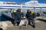 Tartaruga Caretta Caretta ferita al carapace salvata dalla Guardia di Finanza