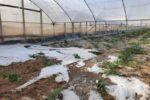 Bomba d'acqua in Sicilia, forte grandinata danneggia aziende agricoli