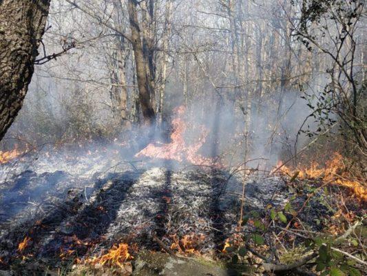 Due incendi in meno di 24 ore nel Catanese, colpite aree boschive e sterpaglie: interventi dei vigili del fuoco