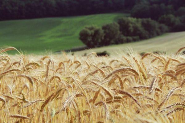 La Sicilia recupera l'agricoltura tradizionale