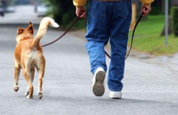 Dall'assistenza alla vita di tutti i giorni sino ai benefici cardiovascolari: si celebra oggi la giornata internazionale del cane
