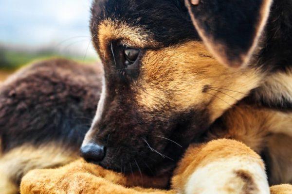 Cane morto dopo essere stato abbandonato in balcone: denunciati due 20enne per maltrattamenti