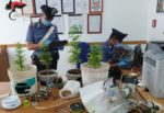 Mini serra nella mansarda di casa, cannabis e materiale per lo spaccio: denunciato un pregiudicato