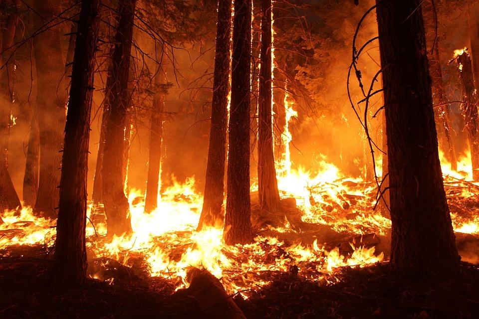 Assolto l'operaio forestale accusato di aver appiccato incendi nel 2017, rimane imputato il figlio