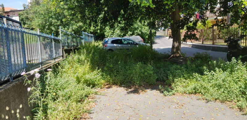 """Erbacce, cura degli alberi e pulizia delle caditoie a Catania. Zingale: """"È il momento di intervenire"""""""
