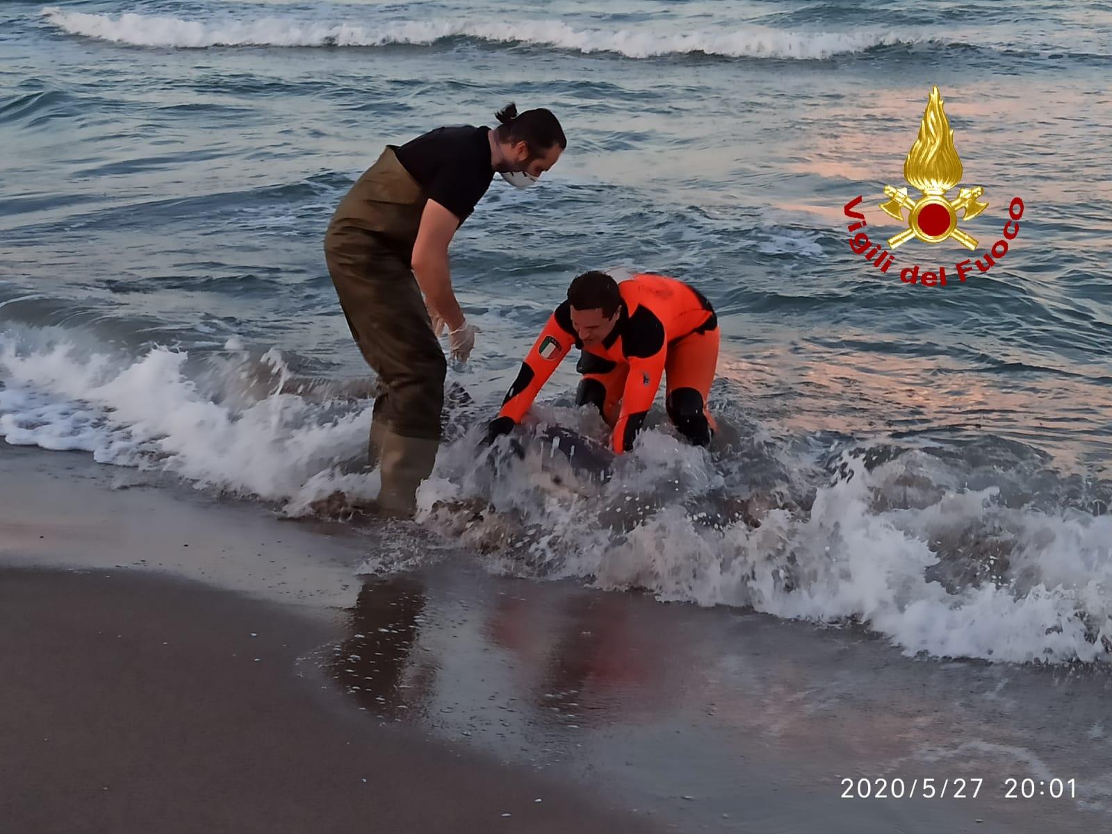 Tragico evento alla Playa di Catania, delfino soccorso in riva muore nonostante gli aiuti – LE FOTO